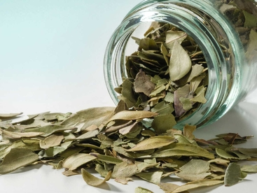 Curry Leaves - Foglie di Curry 10g