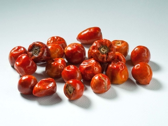 Peperoncino Indian Pearl 20g