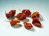 Peperoncino Habanero Red Savina Intero 10g